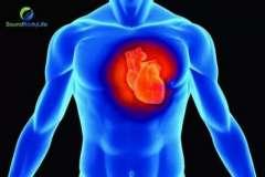Низкокалорийное питание подавляет метаболизм тестостерона